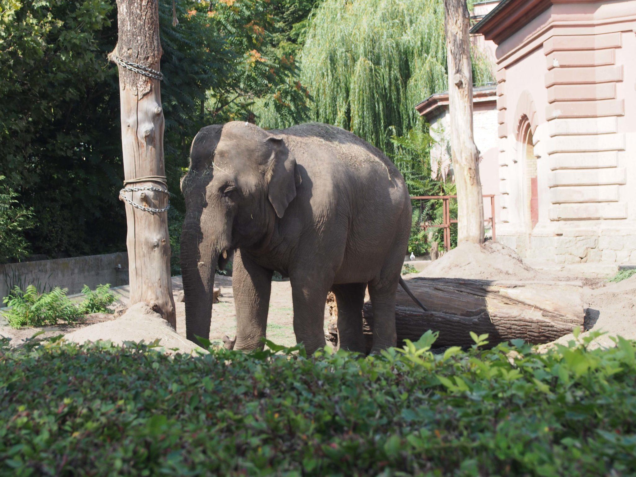 Naporcujte slona